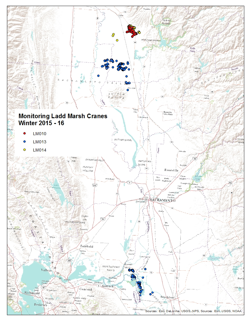 Over-winter (2015-2016) locations of 3 sandhill cranes from Ladd Marsh WMA.